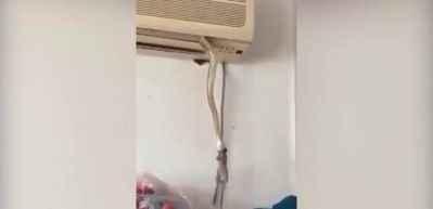Klimanın içinden çıkan yılan, fareyi kapıp götürüyor!