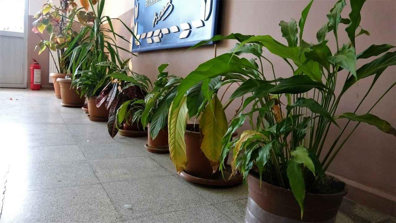 Bu bitkilere dikkat