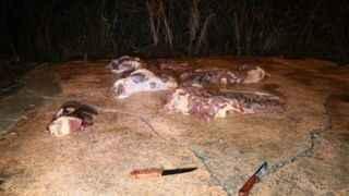 Adana'da gece yarısı at eti operasyonu